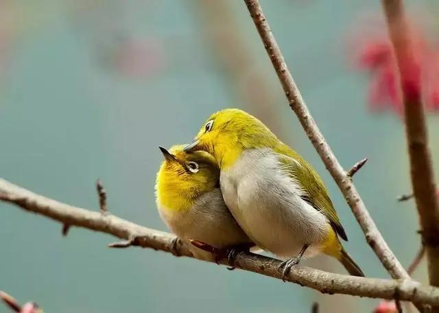 爱它,就请放过它 青岛市检察院就一起非法狩猎野生鸟类案提起公益诉讼